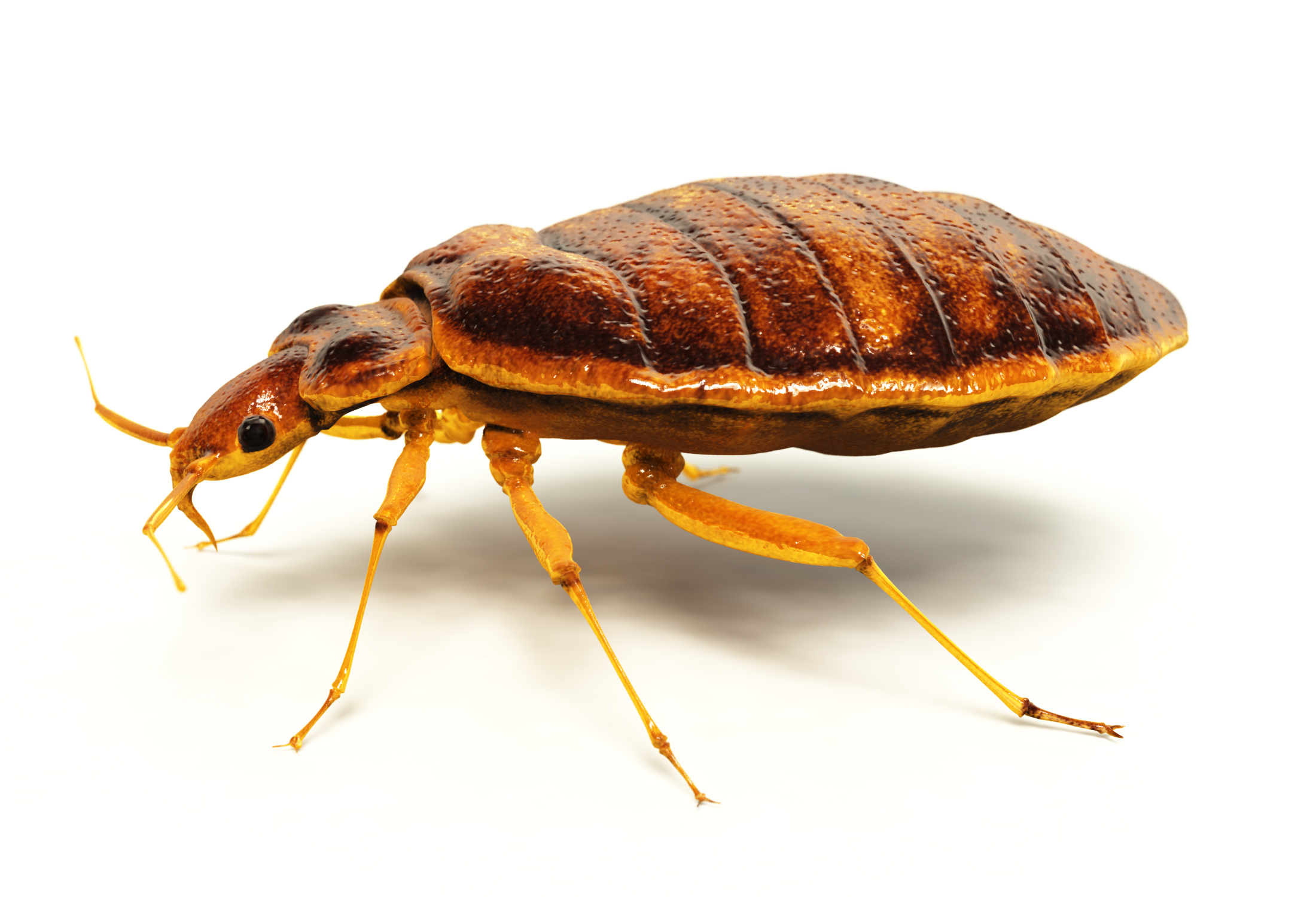 "bed bug invasion A palo alto library re-opened on thursday morning after bed bugs were discovered there earlier in the week, officials said on tuesday, the bed bugs were discovered on two chairs in a ""limited."